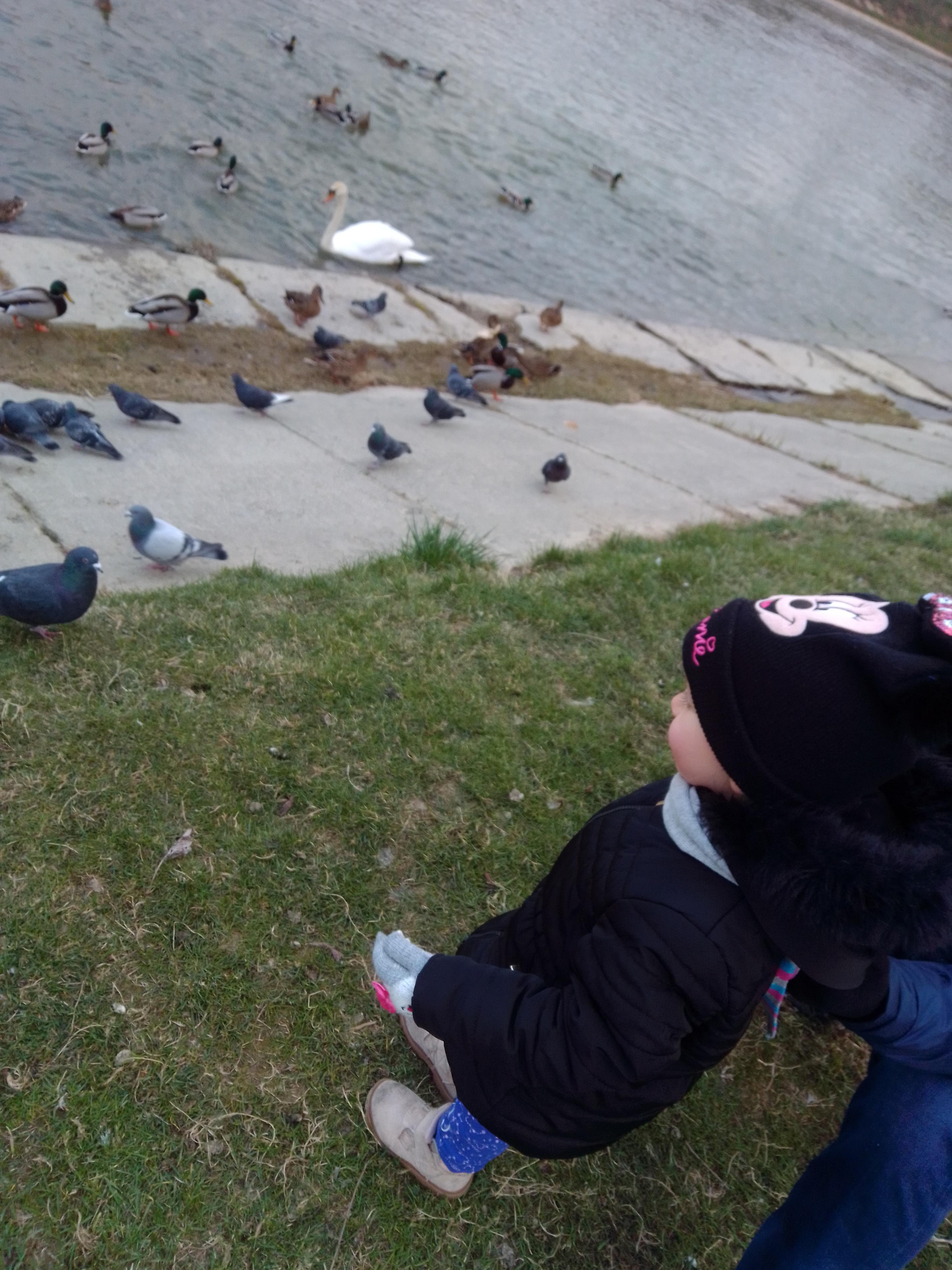 Wszystko wszystkim, ale kaczki trzeba nakarmić :)